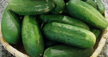 Okurky- všestranná zelenina s nízkou energetickou hodnotou.